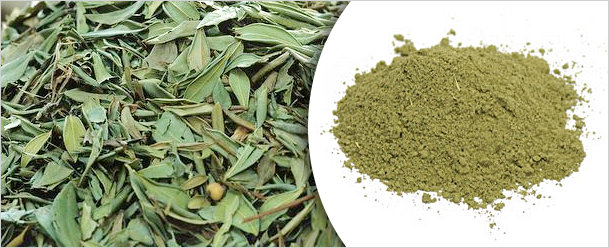 Senna leaves and pods powder, Jyotindra International
